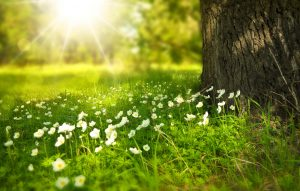 Canicule en France, soleil, été